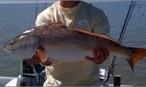 Falcon Point Ranch - Texas Gulf Coast Fishing